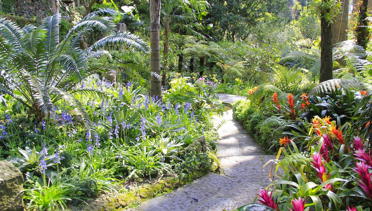 """Résultat de recherche d'images pour """"les jardins de la Mortella"""""""